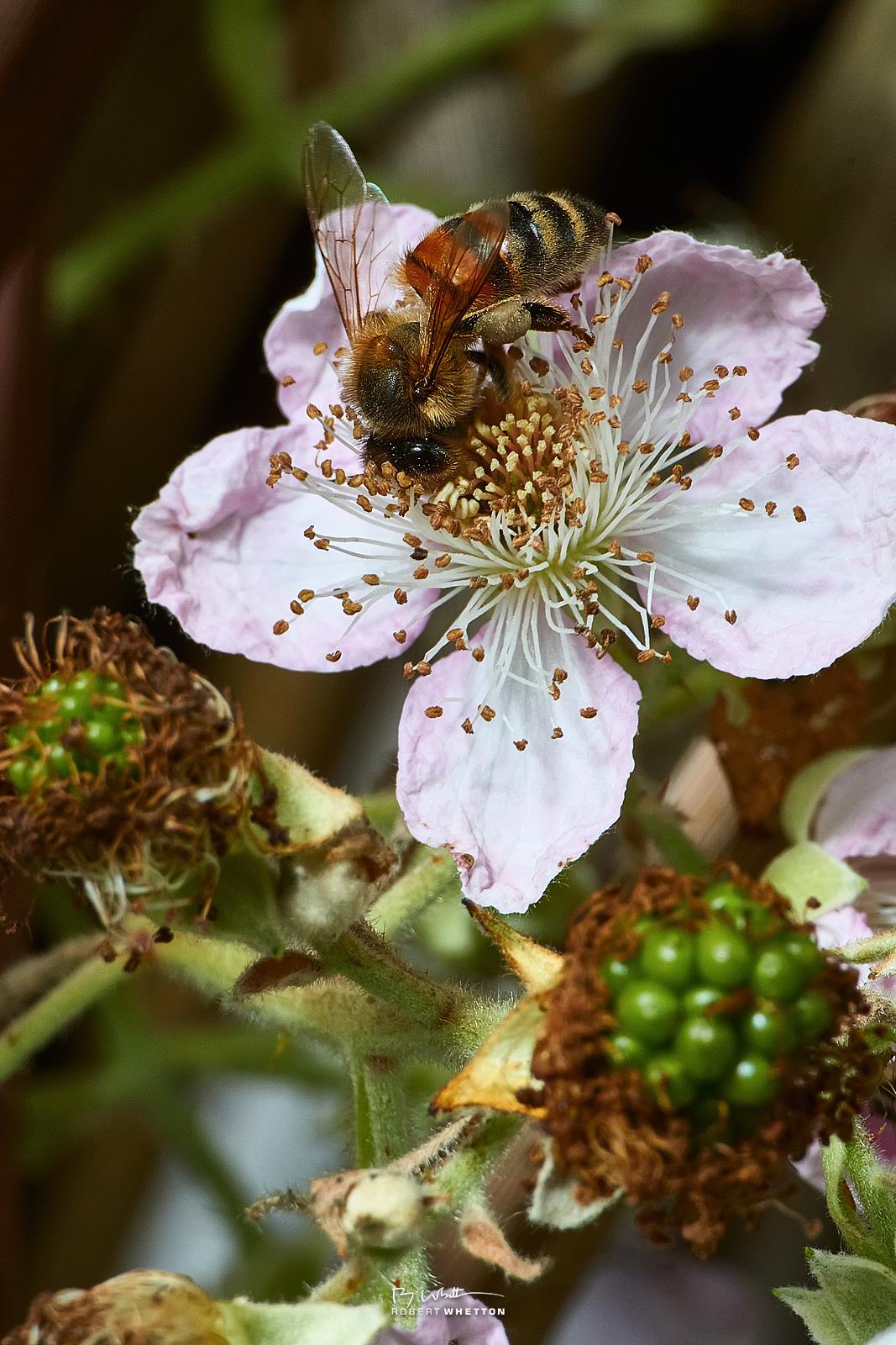 IMAGE: https://photographs.rjwhetton.co.uk/forums/Garden-Jun-21-142942-5980-7D-Mark-II.jpg
