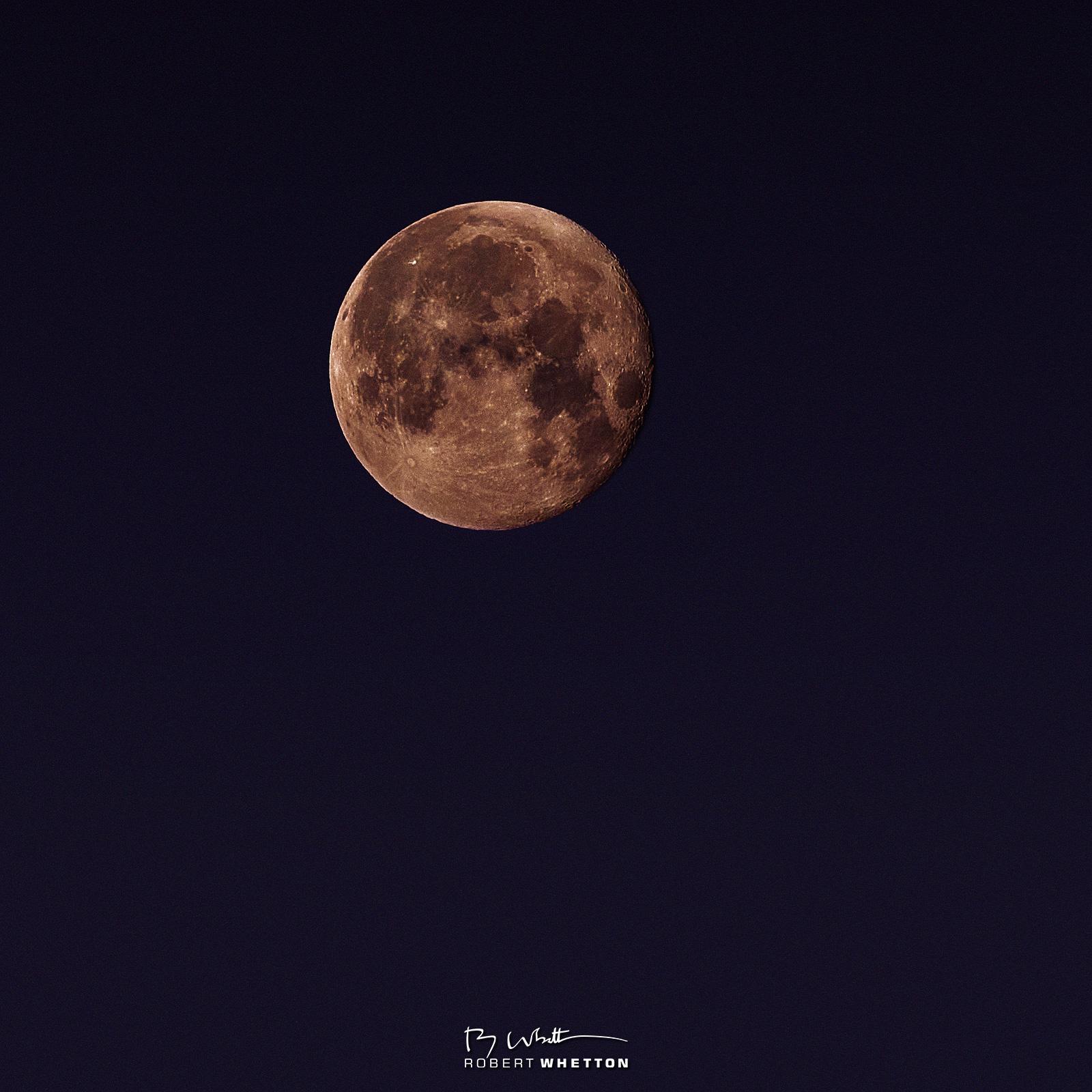 IMAGE: https://photographs.rjwhetton.co.uk/forums/Moon-Robin-Jun-26-042407-0614-7D-Mark-II.jpg
